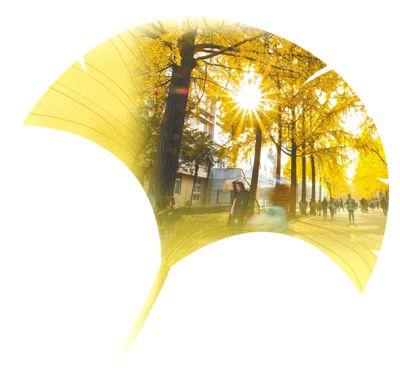 冬日,寻一抹金黄