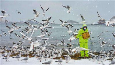 """山东青岛降大雪 """"海鸥饲养员""""来了"""