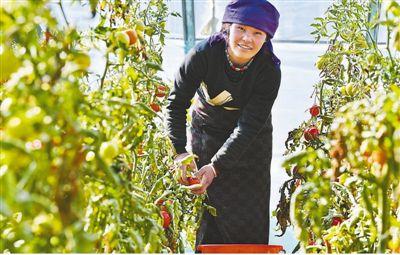 高原菜篮子 全力保供应 缓解高原吃菜难、吃菜贵问题