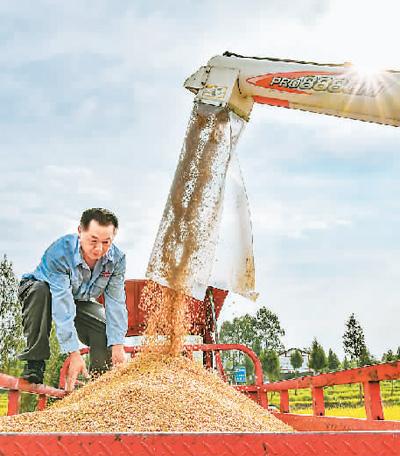 秋粮长势较好生猪存栏恢复农业经济延续向好态势