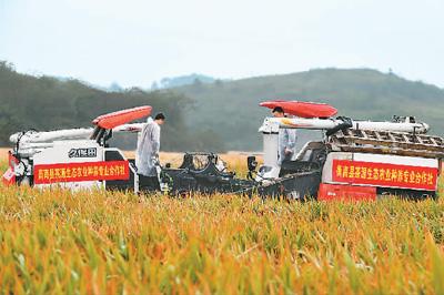 """第三代杂交水稻""""叁优一号""""亩产突破1500公斤"""