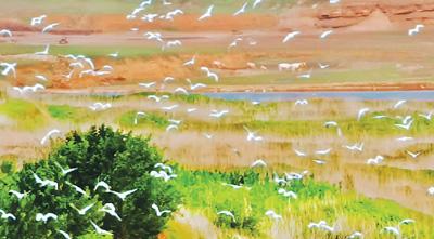 黄河神仙湾看白鹭翩翩
