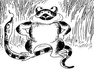 烟蛙吃蛇_烟蛙吃蛇(童话)