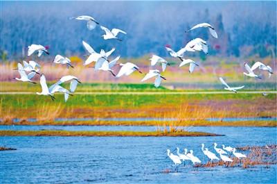 香涧湖畔飞鸟还