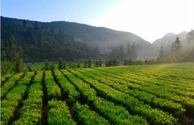 有历史悠久的梅山文化,有世界独享的安化黑茶,有旖旎秀美的自然风光.