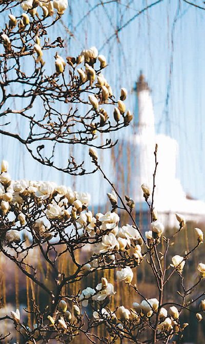 踏青赏花最热门 春季出游需求旺盛