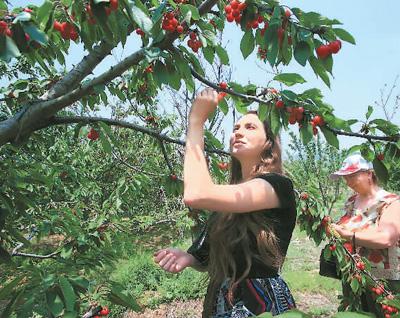 大连樱桃节喜迎海外游客