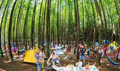 森林旅游:绿色巨伞撑起大市场