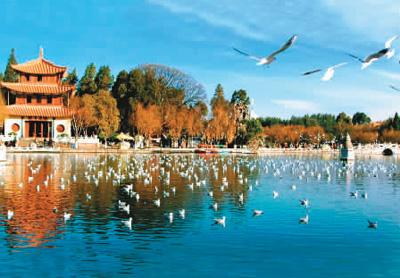 滇池水清鸟欢翔