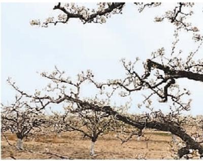 http://www.weixinrensheng.com/yangshengtang/249153.html