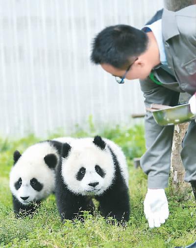 """初夏的""""熊猫幼儿园"""""""