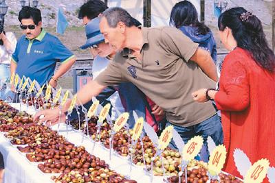 长辛店白枣是北京市丰台区地理标志产品