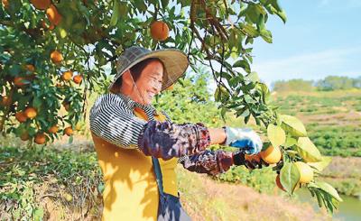 优质优价,农产品卖得真俏(2019中国经济新亮点③)