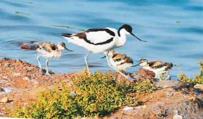 积极开展生物多样性保护工作 取得重大进展