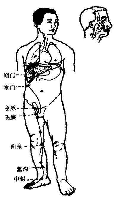 ,肝是在人体的右边,但是我国中医却要说左边是肝,右边是肺,这是图片
