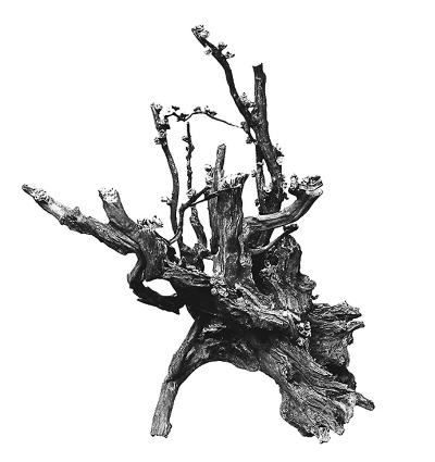 自古以来,在雕塑上大多以浮雕表现山水风景,花草果木,这些浮雕又大多