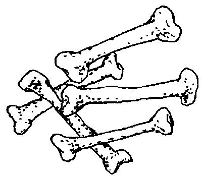 与人或动物的骨骼有关