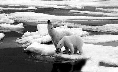 """关于""""全球变暖""""的争论"""