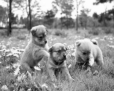 时下,饲养宠物已经成为一种时尚,各类活泼可爱的小动物陪伴着主人