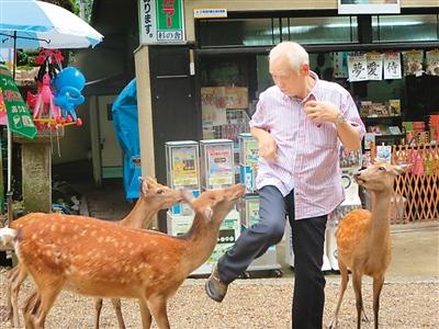 去奈良吧,和小鹿谈场恋爱!