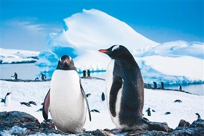 只带来脚印只带走回忆 中国成南极游第二大客源国