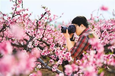 踏春赏花去!
