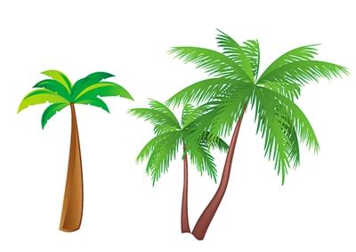 椰汁树叶png图片