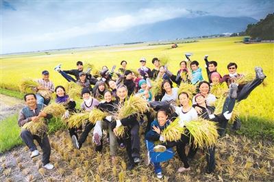 稻禾,飘转两岸的馨香