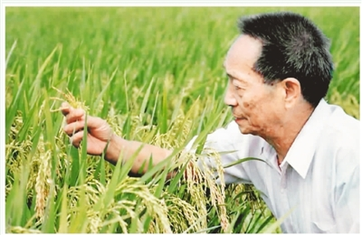小孩抱水稻手绘