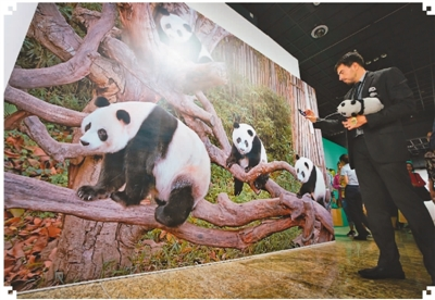大熊猫主题展举行
