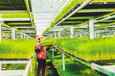 杨庄村林业扶贫的故事