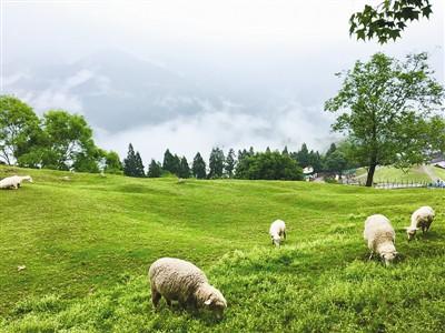 行摄台湾:清境农场