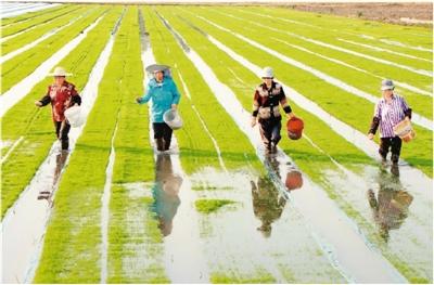 農田奏響綠色節水交響曲
