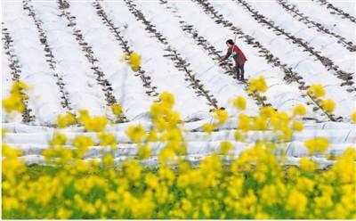 """不误农时,粮食生产抓紧干(透过""""一号文件""""看三农(上))"""