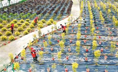 凉风村通过发展乡村旅游ljyjhy、生态渔业、果树、花卉苗木种植等产业
