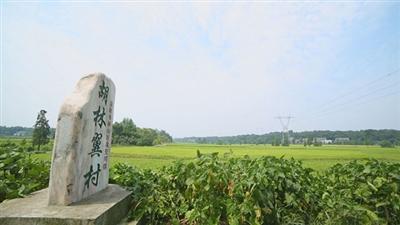 壁纸 成片种植 风景 植物 种植基地 桌面 400_225