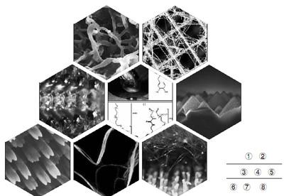 生物梅分子结构图